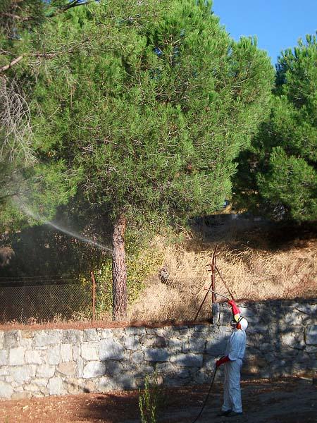 Fumigacion de plantas