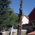 Talas Podas Buitrago del Lozoya
