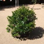 Mantenimiento de Jardines Jardineria Alcala de Henares