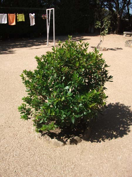 Mantenimiento de jardines jardineria alcala de henares for Calle prado redondo ciempozuelos