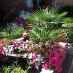 Mantenimiento de Jardines Jardineria Avila