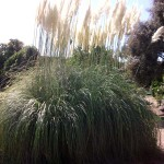 Mantenimiento de Jardines Jardineria Cercedilla