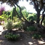 Mantenimiento de Jardines Jardineria Fuente el Saz