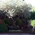 Mantenimiento de Jardines Jardineria Galapagar