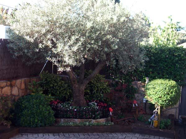 Mantenimiento de jardines jardineria galapagar ricotrebol for Mantenimiento de jardines