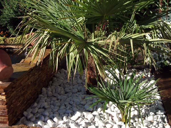Mantenimiento de Jardines Jardineria Guadalix de la Sierra