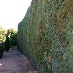 Mantenimiento de Jardines Jardineria Guadarrama