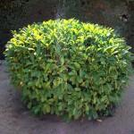Mantenimiento de Jardines Jardineria Hoyo de Manzanares