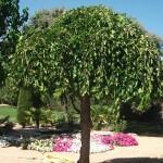 Mantenimiento de Jardines Jardineria Las Lomas