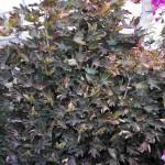 Mantenimiento de Jardines Jardineria Leganes