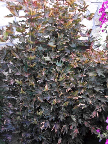 Mantenimiento de jardines jardineria leganes ricotrebol for Jardineria las rozas