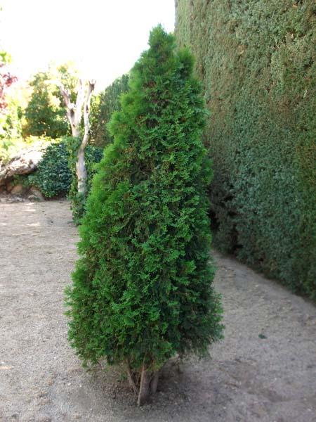 Mantenimiento de Jardines Jardineria Los Angeles de San Rafael