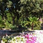 Mantenimiento de Jardines Jardineria Mirasierra