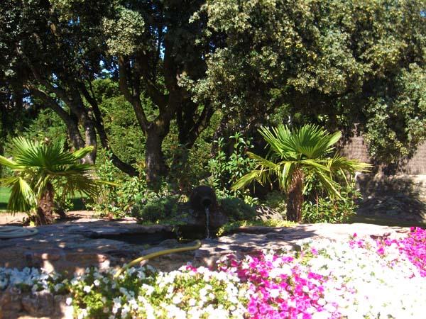 Mantenimiento de jardines jardineria mirasierra ricotrebol for Mantenimiento de jardines