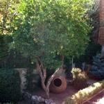 Mantenimiento de Jardines Jardineria Mostoles