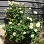 Mantenimiento de Jardines Jardineria Navacerrada