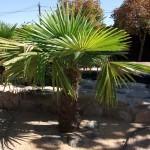 Mantenimiento de Jardines Jardineria Parque Conde de Orgaz