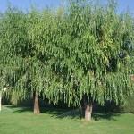 Mantenimiento de Jardines Jardineria Pozuelo de Alarcon