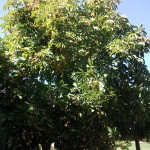 Mantenimiento de Jardines Jardineria San Agustin de Guadalix