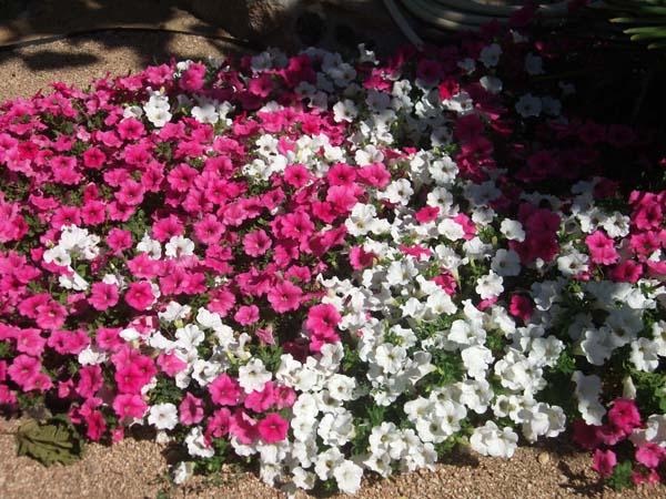 Mantenimiento de Jardines Jardineria San Fernando de Henares