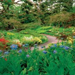 Mantenimiento de Jardines Jardineria Sierra de Madrid