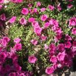 Mantenimiento de Jardines Jardineria Toledo