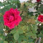Mantenimiento de Jardines Jardineria Villafranca del Castillo