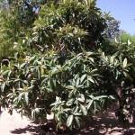 Mantenimiento de Jardines Jardineria Villanueva de la Cañada