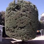 Mantenimiento de Jardines Jardineria Villanueva del Pardillo