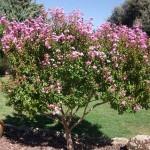 Mantenimiento de Jardines Jardineria Villaviciosa de Odon