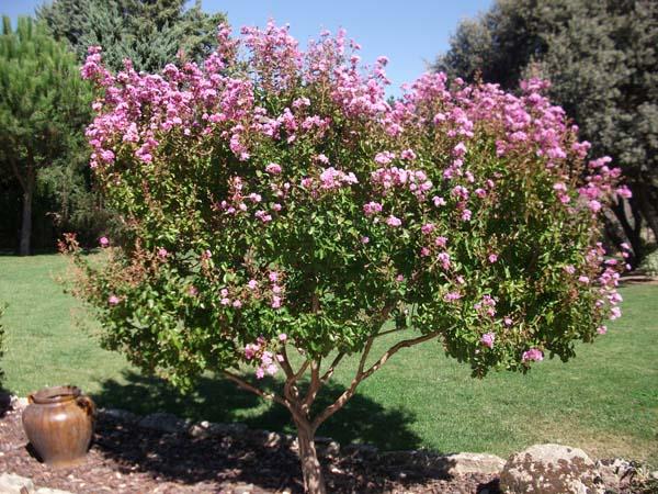 Mantenimiento de jardines jardineria villaviciosa de odon ricotrebol - Mantenimiento de jardines ...