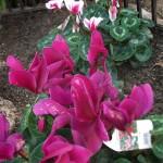 Jardineros en Alcala de Henares