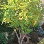 Jardineros en Alcorcon