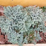 Jardineros en Aranjuez