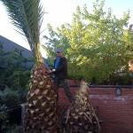 Jardineros en Mostoles