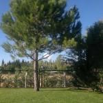 Jardineros en Pozuelo de Alarcon