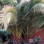 Jardineros en San Fernando de Henares